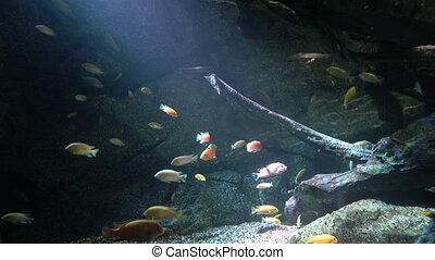 sea fish swim between corals. aquarium with a large aquarium and a lot of marine life.
