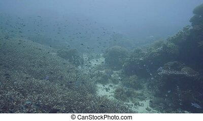 Sea fish swimming over coral reef and seaweed on sea bottom...