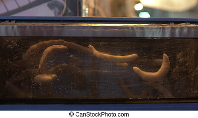 Sea food aquarium with spoon worms - Spoon worms in the...