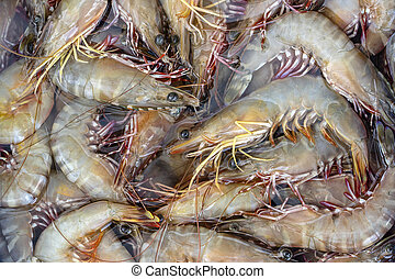 Sea fresh shrimps at street market in Thailand. Seafood concept.