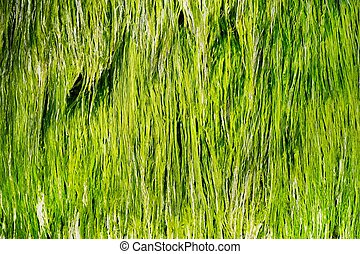 Fresh green sea grass in clean water