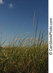 Sea Grass & Sky