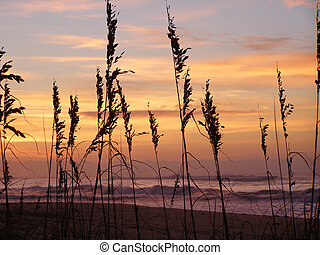 View of the ocean surf and colorful sunrise beyond the sea grass silhouetted in the forground.