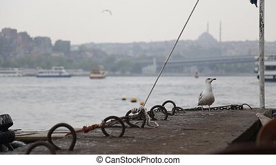 sea gull and landscape Golden Horn in Istanbul. Turkey - sea...