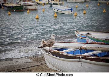 sea gull bird perching on local wood boat in capri island south italy