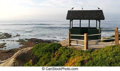 Sea gull birds on alcove roof. Seagulls on wooden arbor, ...