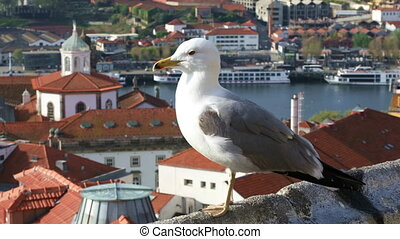 Sea gull close up - Sea gull sitting on the parapet on the...