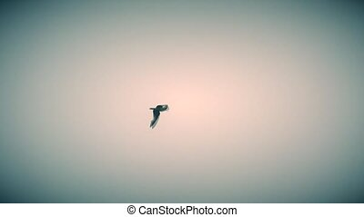 Sea gull flies high on background of beautiful sky