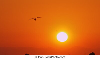 Slow motion shot of black silhouette of sea gull flying in evening orange sky with bright golden sun shining