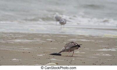 sea gull on the beach