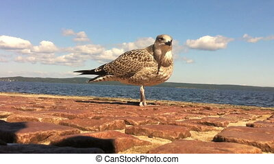 Sea gull on the quay