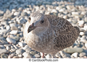 Sea Gull perched against nice background