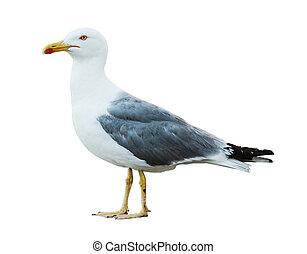 Sea gull profile on white background