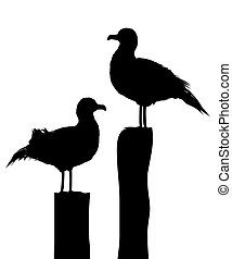 Silhouettes of two sea gulls standing on pier. Ioslated objects against white background.