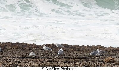 Sea Gull Sitting on a Rock, background of stormy ocean