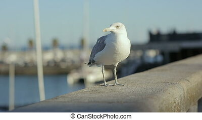 Sea gull starts fly from embankment portugal lisbon rivera...