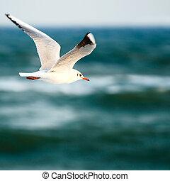 sea gull on background sky