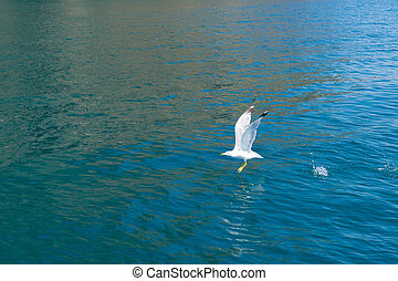 Sea gull takes off from the water