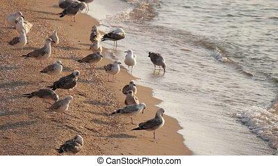 Sea Gull team resting on sandy beach slow surf. Focus on foreground.