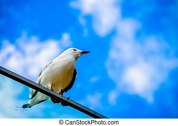 Sea gull with blue sky