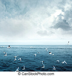 Sea gulls fly