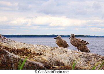 Sea gulls on a rock by the gulf