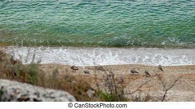 Sea gulls on a sandy beach on the Azov Sea. Landscape with...
