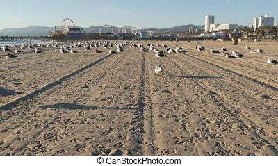 Sea gulls on sunny sandy california beach, classic ferris wheel in amusement park on pier in Santa Monica pacific ocean resort. Summertime iconic view, symbol of Los Angeles, CA USA. Travel concept.
