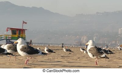 Sea gulls on sunny sandy california coast, iconic retro wooden rainbow pride lifeguard watchtower. Venice beach near Santa Monica resort. Summertime symbol of Los Angeles, CA USA. Travel concept.