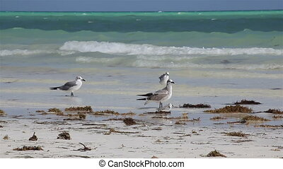 Sea-gulls on the coast of ocean.