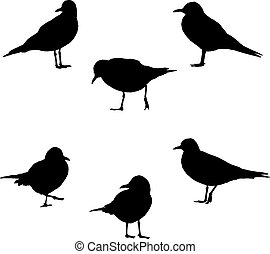 sea-gulls, poses, illustration