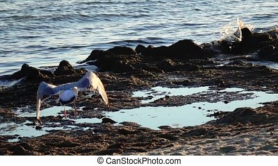Sea gulls stand on the beach and brush their feathers with...