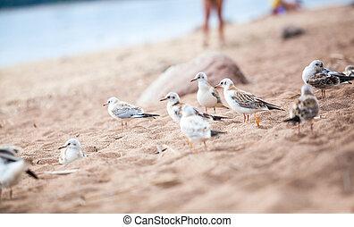sea gulls standing on a sandy beach