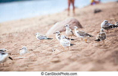 sea gulls standing on a sandy beach