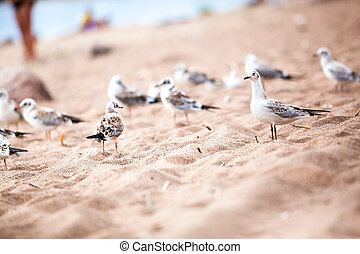 sea gulls standing on a sandy beach close up