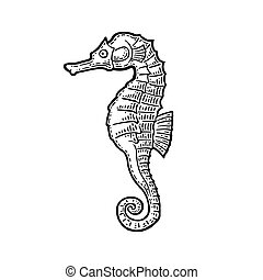 Sea Horse. Vector black engraving vintage illustrations.