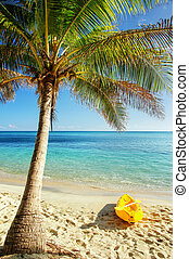 Sea kayak on the beach near palm tree