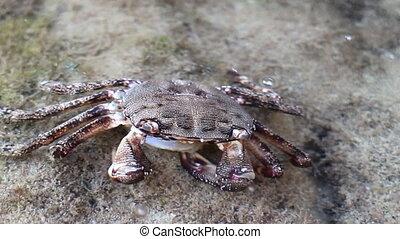 Sea life. A dead crab and eat his shrimp - Sea life. Dead...