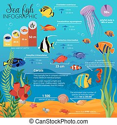 Sea Life Animals Plants Infographic