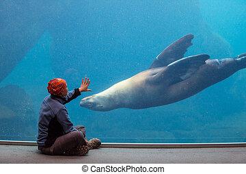 Sea life - girl playing with sea lion