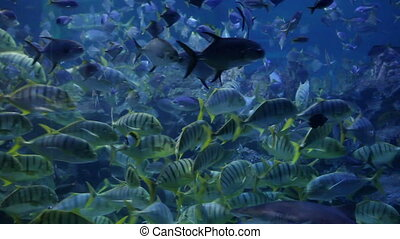 Sea life of colony fishes swimming underwater in Indian ocean