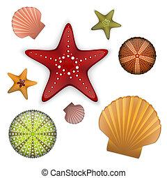 Sea life set, starfishes, scallop shell, sea urchin.