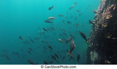 Sea life shot of fish school swimming in rock reef -...