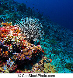 Sea Lilie on Tropical Coral Reef - Black and White Big Sea...