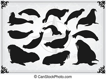 Sea lion and seal illustration collection background