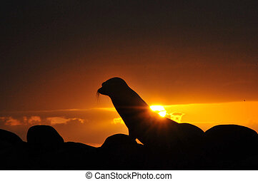 sea lion at sunset on the beach, Galapagos