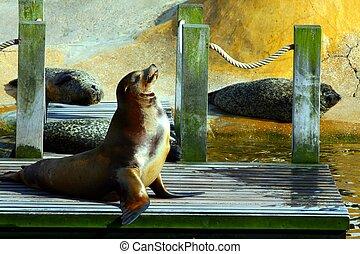 Sea lion enjoying the sun.