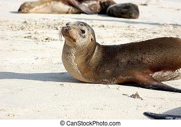 Sea lion on Galapagos beach