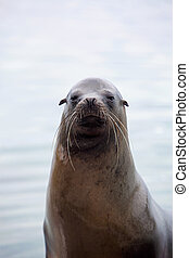 Sea lion portrait with the ocean in the background
