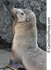 Sea Lion Portrait